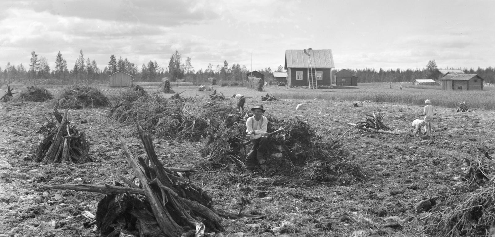 Peltoraivio vuolijokelaisella uudistilalla 1930. (Ivar Aleksander Ekström / Varkauden museo)